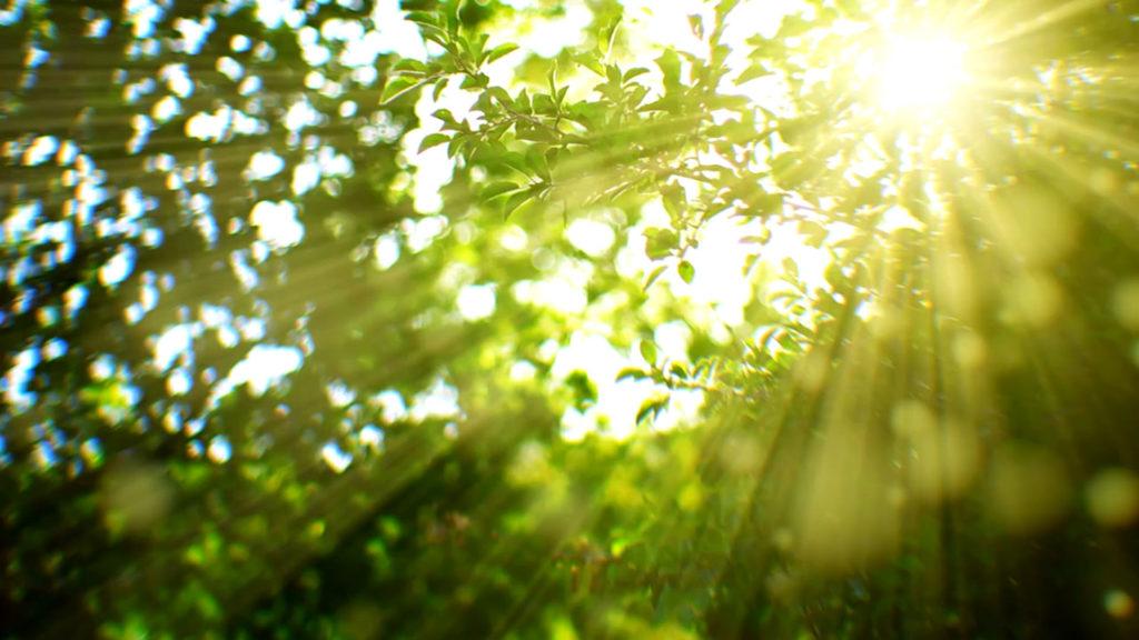 Wald Frisagisten